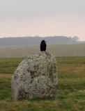 Stonehenge Crow header